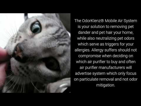 Best Air Purifier For Pet Allergies