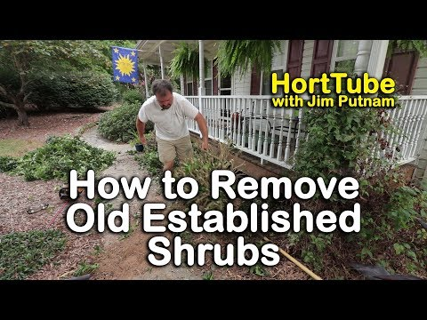 How To Remove Old Elished Shrubs Digging Out Well
