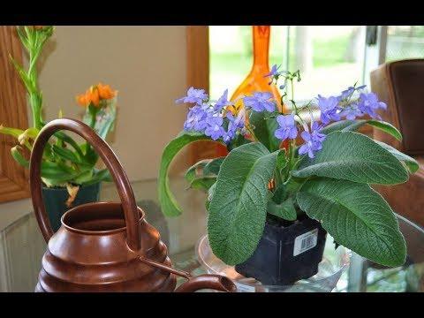 Почему ОПАДАЮТ БУТОНЫ у комнатных растений? Что делать?