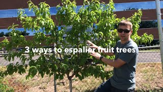 Espalier fruit trees: 3 ways to grow a living fruiting fence