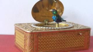 rochat tabatiere oiseau chanteur