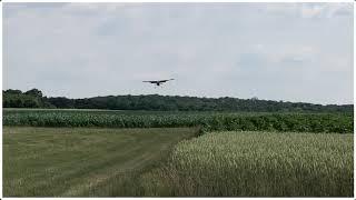 Former Austrian Airforce Cessna L19 Birddog OECCI visits LOFK Airport
