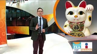 ¡Feliz Día Internacional del Gato! | Noticias con Francisco Zea