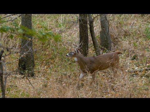 The DNR Wildlife Program