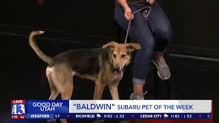 BALDWIN - Fox 13 Best Friend from the Humane Society of Utah