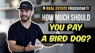 How Much Should You Pay A Bird Dog - DON