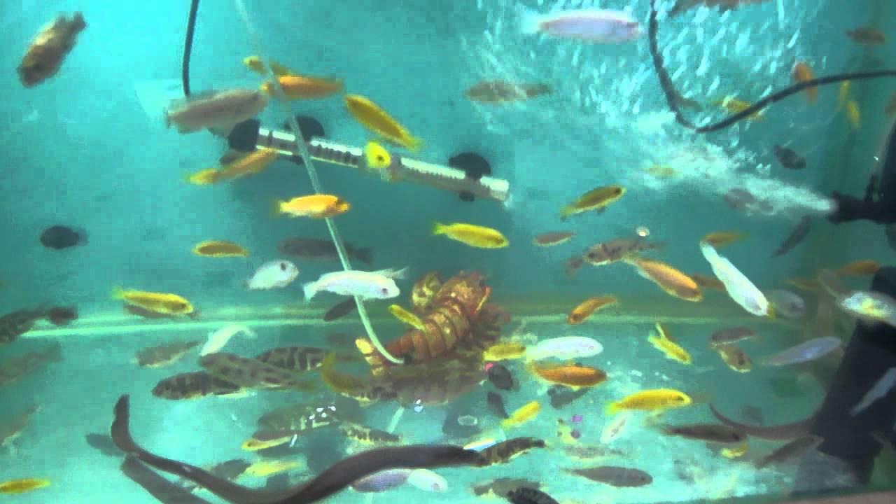 Cazanimo animalerie draria alger algerie youtube for Animalerie poisson