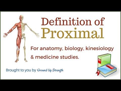 Proximal Definition (Anatomy, Kinesiology, Medicine)