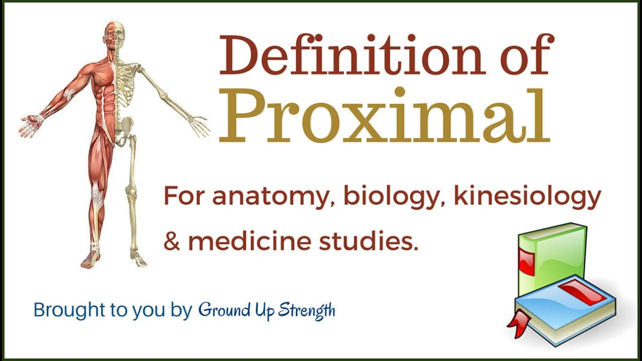 Proximal Definition (Anatomy, Kinesiology, Medicine) - YouTube