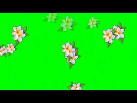 Plumeria Flowers falling Green screen  Free Effects thumbnail