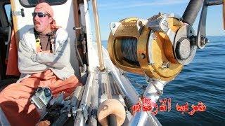 سمكة التونة العنيدة حرب الارقام