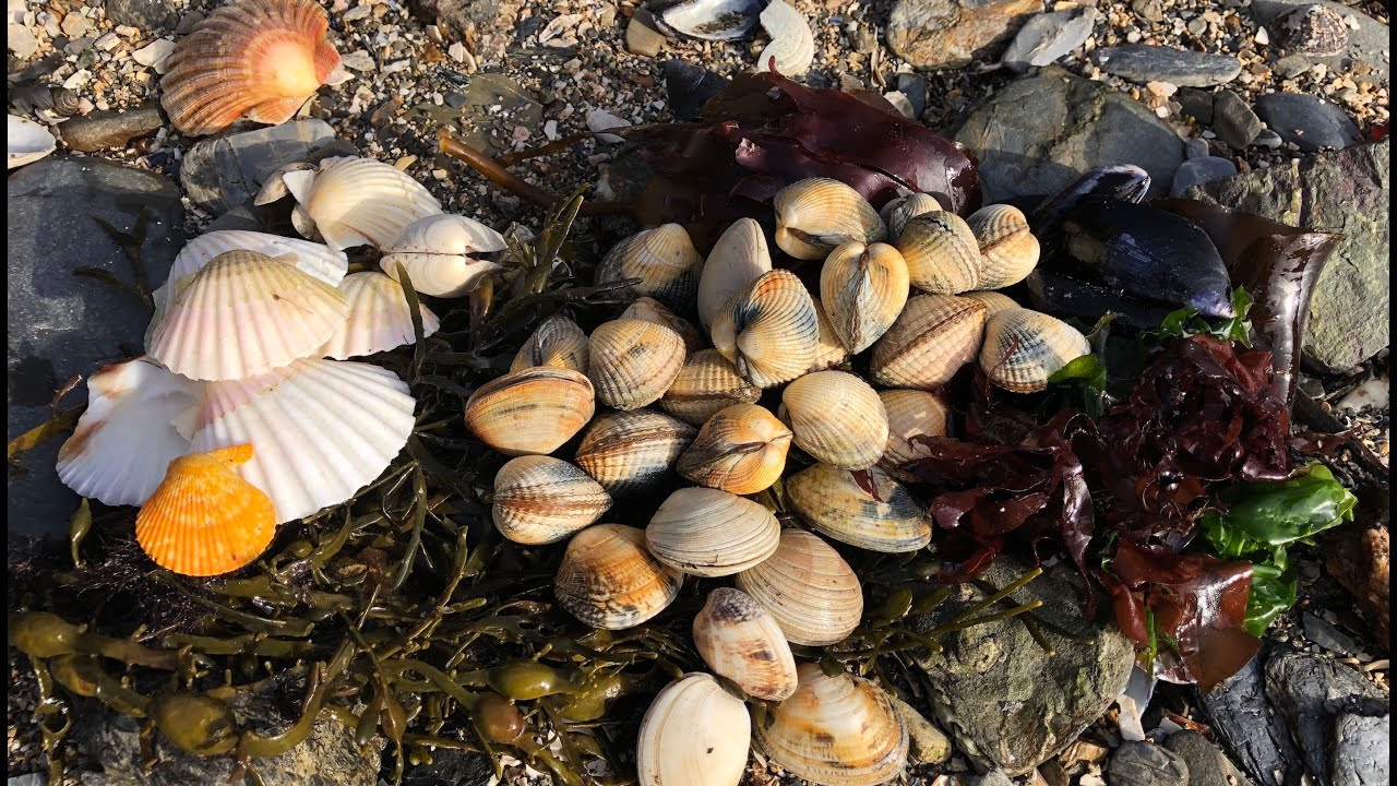 Coastal Foraging - Clams, Mussels, Cockles and Edible Seaweed Beach Cook Up