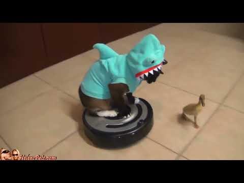 Cat Shark Duck Dog Roomba
