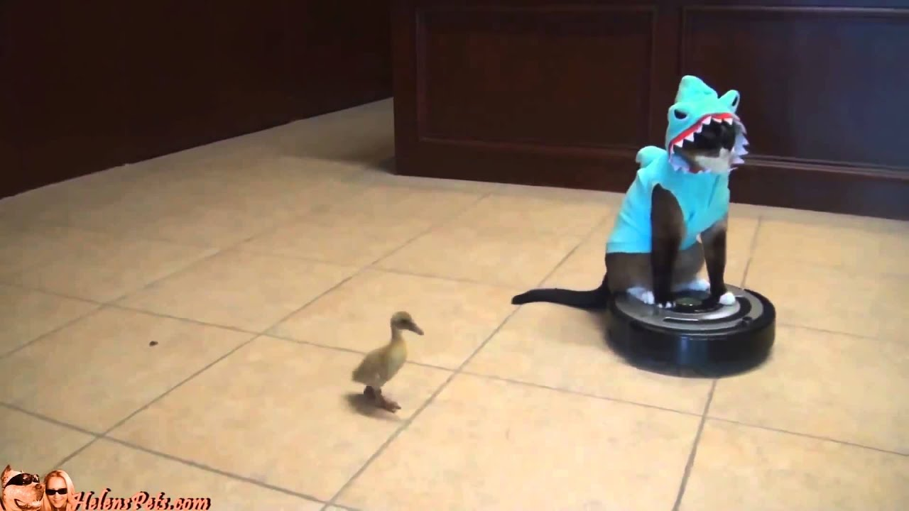 Cat Shark Duck Dog Roomba - YouTube