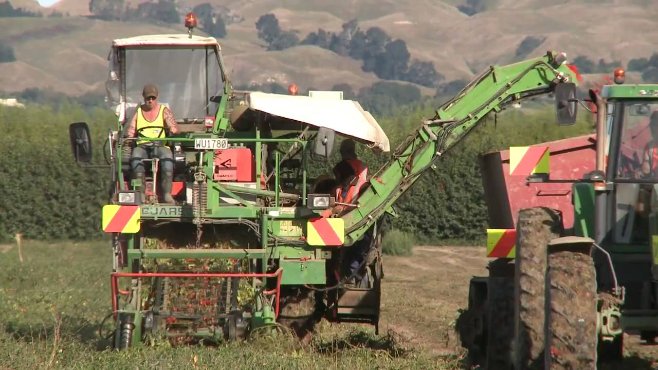 Tomato Harvesting Machinery In Action Youtube