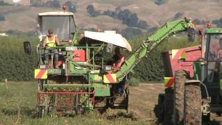 tomato harvesting machinery in action