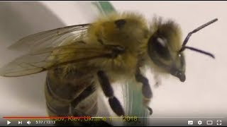 Медовий Спас. Ціна меду. Спілка Пасічників и Союзы Пчеловодов в Украине?