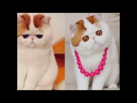 Hình Nền Mèo Cực Dễ Thương 2014