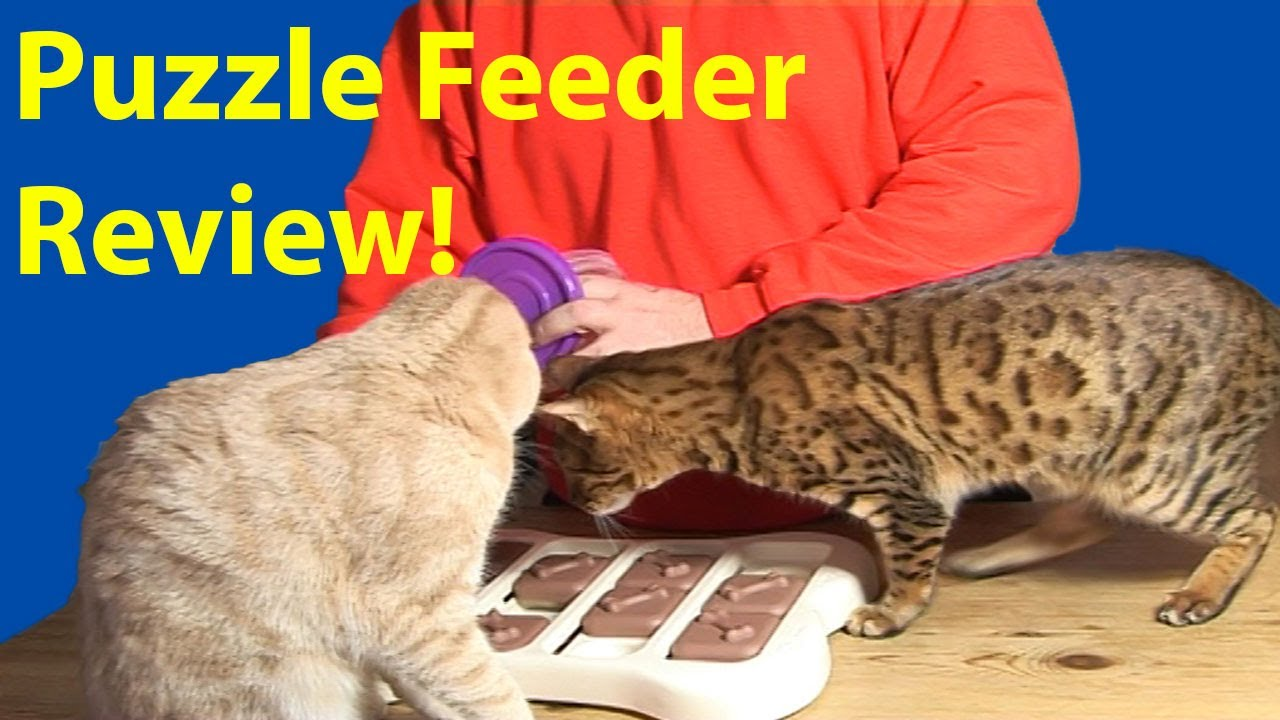 youtube a feeder make watch cat puzzle