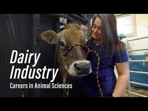 Dairy Industry l Careers in Animal Sciences