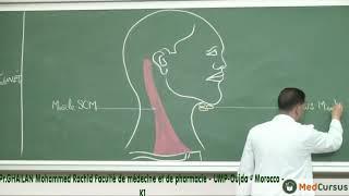La vascularisation  Lymphatique  - Partie 1 - Pr. GHAILAN  Med  Rachid  fac de médecine oujda