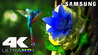 Short 4k ultra high definition demonstration by samsung.