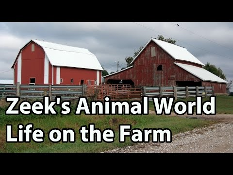 On the Farm: Cows, Chickens, Sheep & More! - Zeek's Animal World