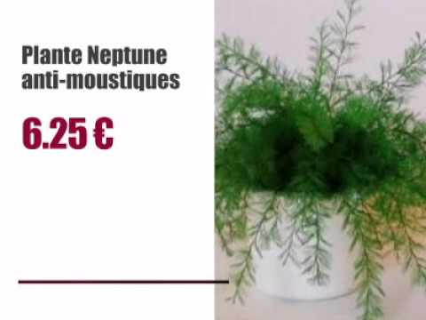 la plante neptune anti moustiques youtube. Black Bedroom Furniture Sets. Home Design Ideas