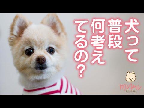 ミミチャンネル更新です!