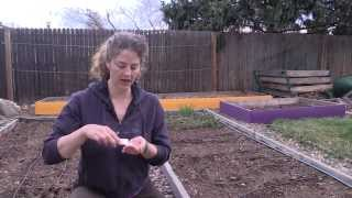 The EASY Way to Plant Carrot Seeds
