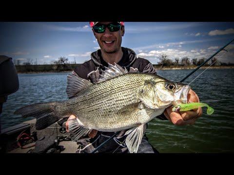 Understanding White Bass – Fishing Edge TV