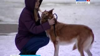 За отлов бродячих собак будут отвечать чиновники(, 2015-03-23T09:10:36.000Z)
