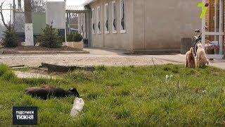 У Великому Дальнику бродячі собаки покусали дітей