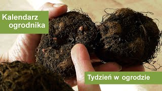 http://tv.ucoz.pl/dir/ogrodnictwo/luty_w_ogrodzie_kalendarz_ogrodnika_na_15_02_21_02_prace_ogrodnicze_w_lutym/4-1-0-312