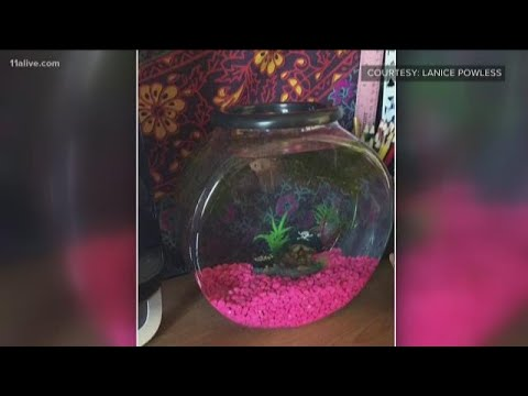 The Pursuit of Happiness - College Student Upset After Southwest Wouldn't Allow Her Pet Fish to Fly