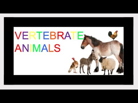 Vertebrates Animals -  Classifying Animals ***KIDZVIDZ***