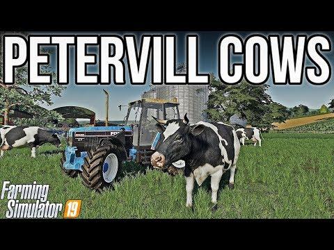 we-got-100-cows!- -petervill-fs19