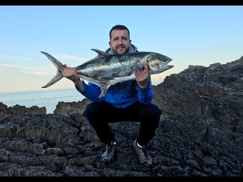 Montenegro Spinning - Leerfish 6.7 kg (Lichia amia) on Duo Realis Fangpop 105