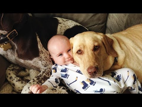 Baby and Pet - The Dog Makes Friends With The Baby # 11 | BABY AND PET