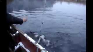 Ловля щуки на спиннинг видео Ловля щуки спиннингом Ловля щуки осенью на спиннинг Смотреть бесплатно