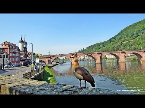 Visit to Heidelberg - Germany
