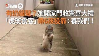 有小貓叫聲?打開家門 驚見虎斑貓帶6孩投靠|流浪貓|寵物