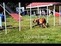 Dobříšská nulka - agility + jumping A0