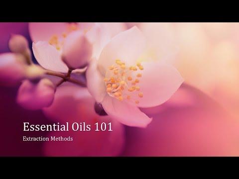 Essential Oils 101: Extraction Methods
