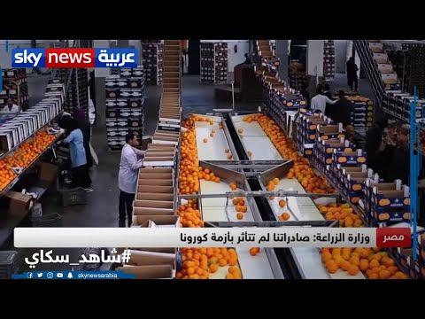 مصر.. الصادرات الزراعية لم تتأثر بأزمة كورونا  - نشر قبل 15 ساعة