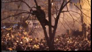 Разгон майдана.  Беркут избивает протестантов