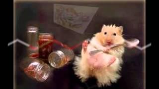 Śmieszne zwierzęta według TheYoYoMiner'a :D odc.2-