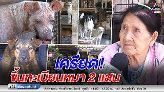 ข่าวเที่ยงอมรินทร์ : ยายเครียด! เลี้ยงหมาแมวกว่า 500 ตัว กลัวต้องจ่ายค่าขึ้นทะเบียน 2 แสน (111061)