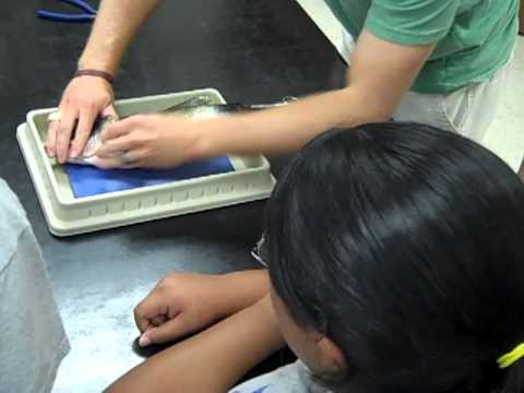 Texas State Aquatic Biology Fish Dissection