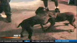 Illegal Animal Fights rising in LA, cock & Pit Bull fighting.  ;(